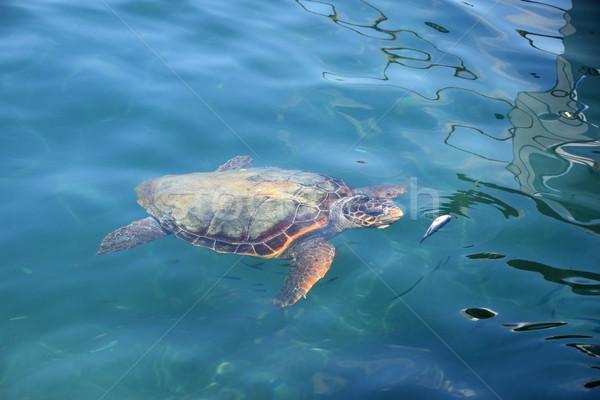 海 カメ 小 魚 ビーチ ストックフォト © sirylok