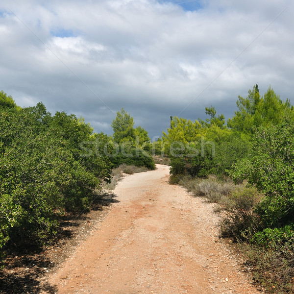 forest path Stock photo © sirylok