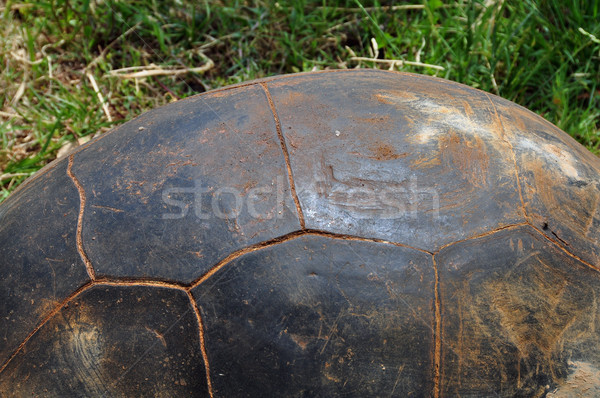 aldabra giant tortoise Stock photo © sirylok