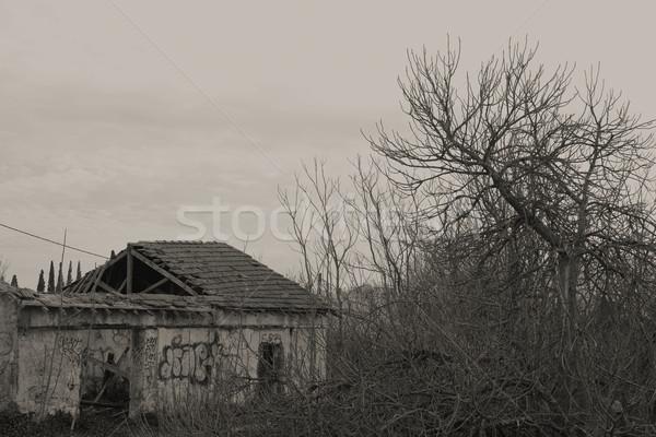 台無しにする 植生 捨てられた 家 屋根 森 ストックフォト © sirylok