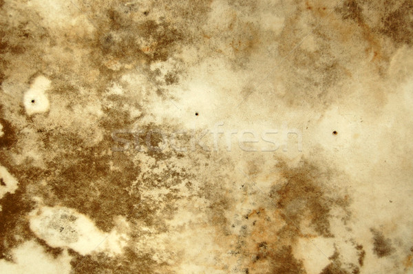 Bolor textura água crescimento teto Foto stock © sirylok