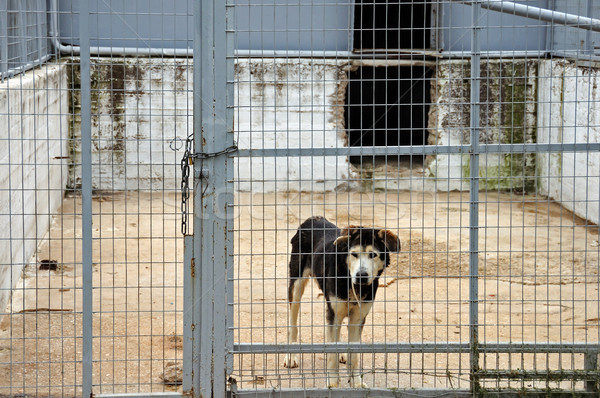 Psa wejście opuszczony magazynu budynku metal Zdjęcia stock © sirylok