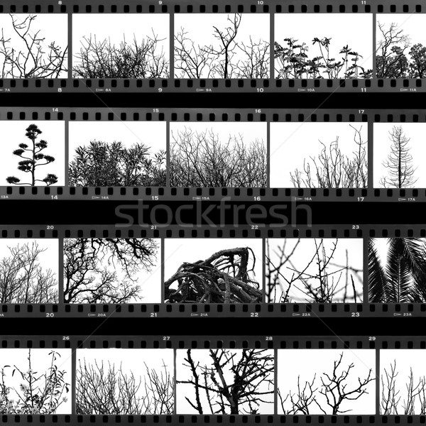 trees and plants film proof sheet Stock photo © sirylok