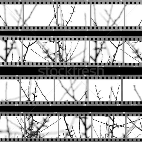 contact sheet with photos of tree branches Stock photo © sirylok