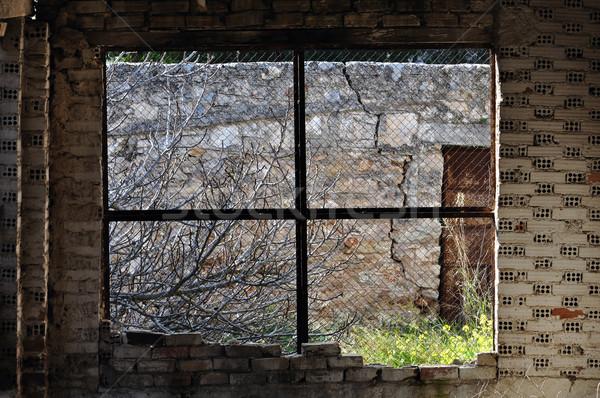 overgrown garden abandoned interior Stock photo © sirylok