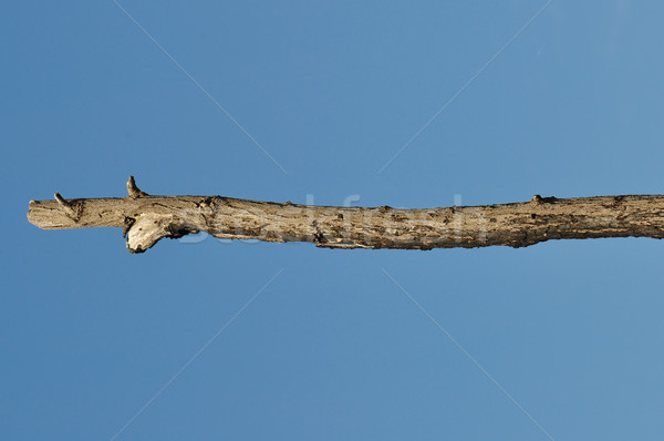 wooden stick tree branch detail Stock photo © sirylok