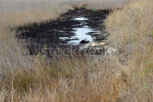 tar pit Stock photo © sirylok