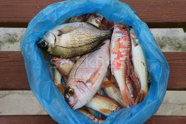 fresh fish Stock photo © sirylok