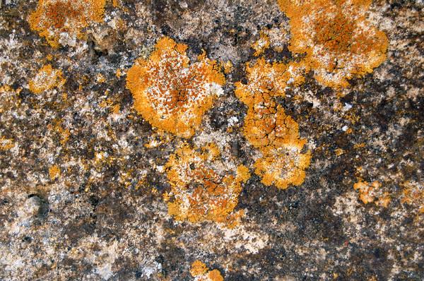 ストックフォト: 石 · 菌 · 風化した · 黄色 · 抽象的な · テクスチャ