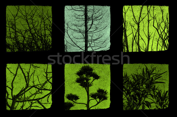 árvores plantas detalhes abstrato natureza ilustração Foto stock © sirylok