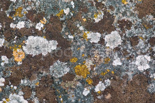 Kamień grzyb wyblakły żółty streszczenie tekstury Zdjęcia stock © sirylok