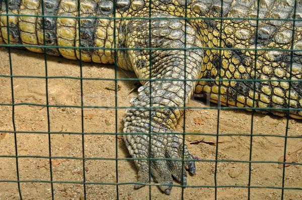Krokodil esaret cilt detay tehlikeli Stok fotoğraf © sirylok