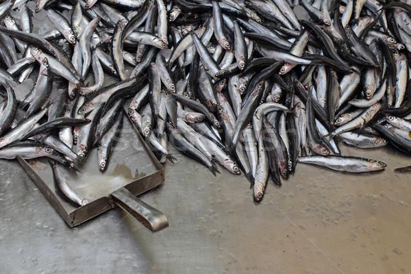 Vers vis verkoop markt vissen dode Stockfoto © sirylok