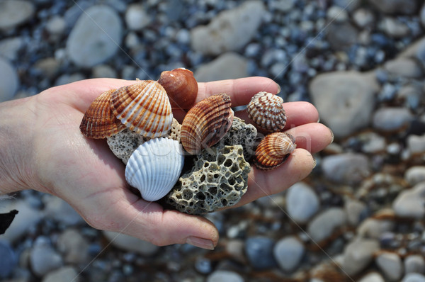 sea shells and pumice stones Stock photo © sirylok