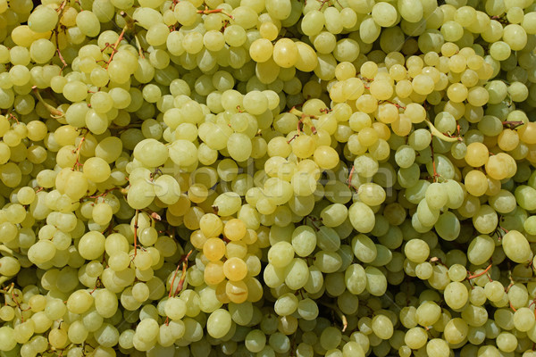 seedless grapes background Stock photo © sirylok