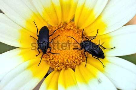 flowerbed Stock photo © sirylok