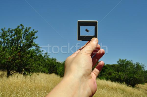Foto Folie unter Vogel Hand halten Stock foto © sirylok