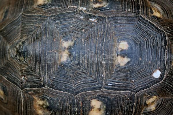 turtle shell texture Stock photo © sirylok