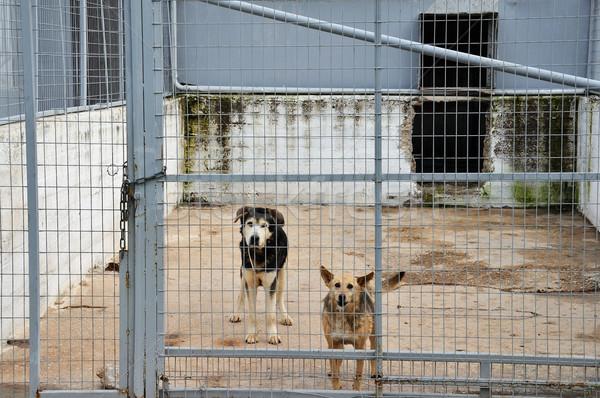 caged dogs Stock photo © sirylok