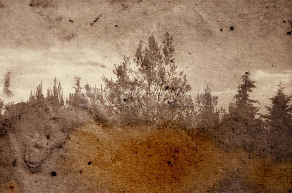 fading forest Stock photo © sirylok