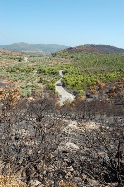 burned trees Stock photo © sirylok
