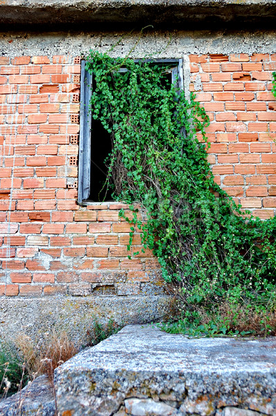 plant growing through window Stock photo © sirylok