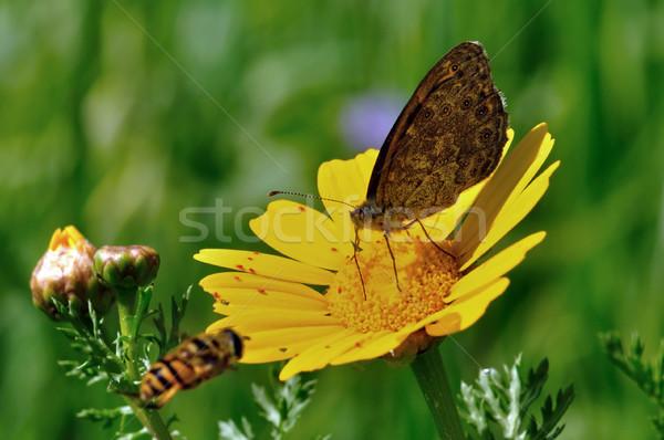 Bahar trafik arı uçan kelebek Stok fotoğraf © sirylok