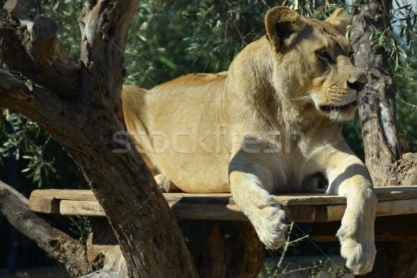 アフリカ 木製 プラットフォーム 自然 ストックフォト © sirylok