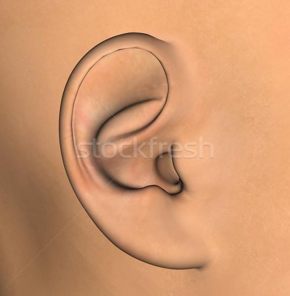 human ear illustration Stock photo © sirylok