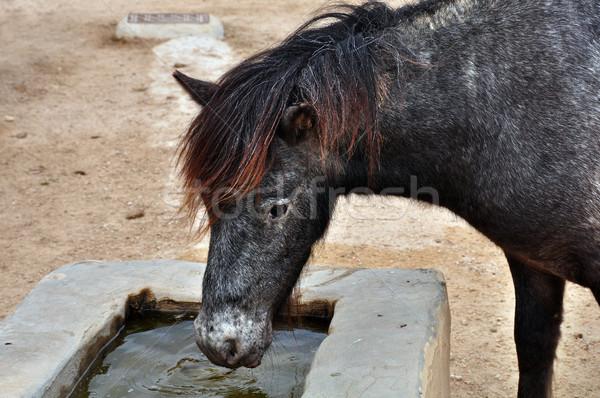 skyrian wild pony Stock photo © sirylok