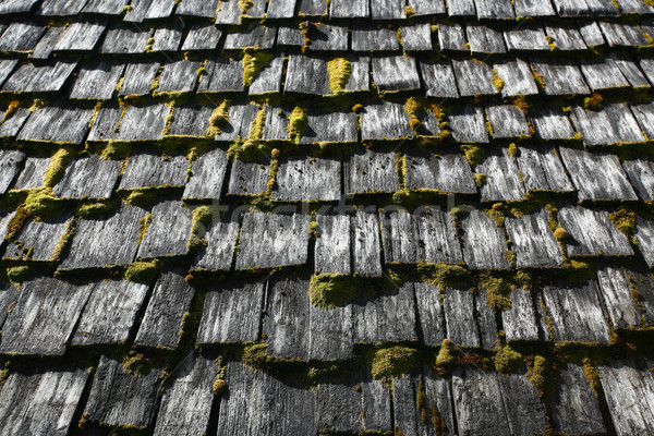 крыши мох покрытый серый Сток-фото © skylight