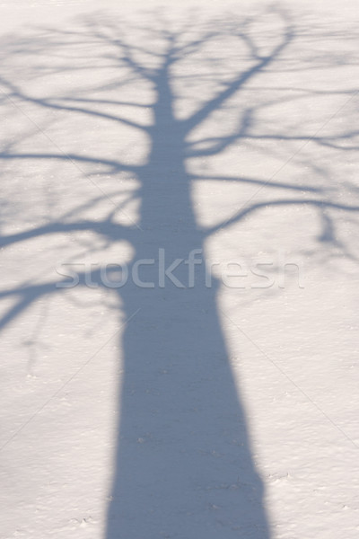 Winter Tree Shadow 3 Stock photo © skylight