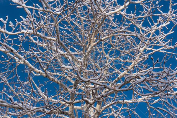 снега покрытый зима дерево рано Сток-фото © skylight