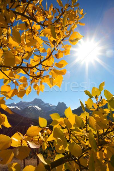 горные осень тополь листьев гор Сток-фото © skylight