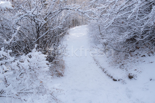 Snowy Pathway 2 Stock photo © skylight