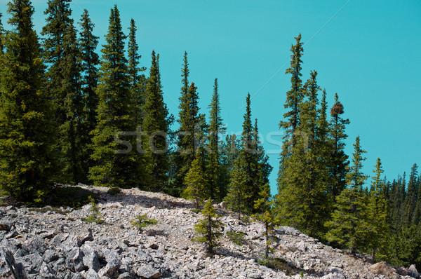 деревья альпийский озеро Сток-фото © skylight