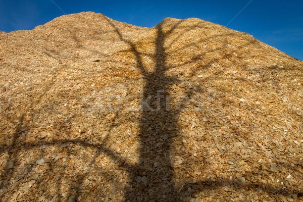 большой древесины чипов дерево тень Сток-фото © skylight