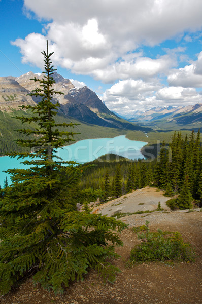 Mountain Lake in the Canadian Rockies Stock photo © skylight