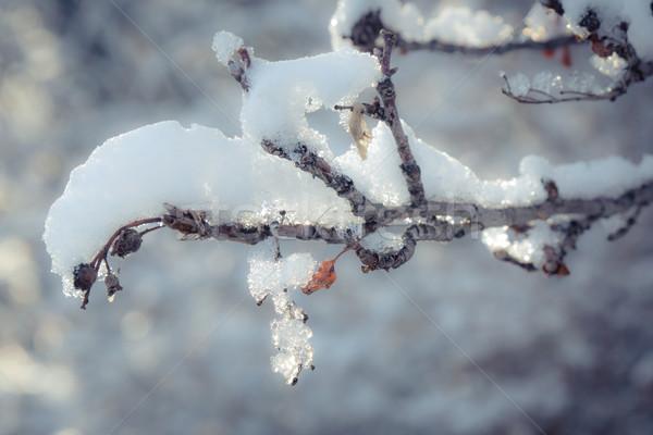 снега покрытый филиала тесные выстрел Сток-фото © skylight
