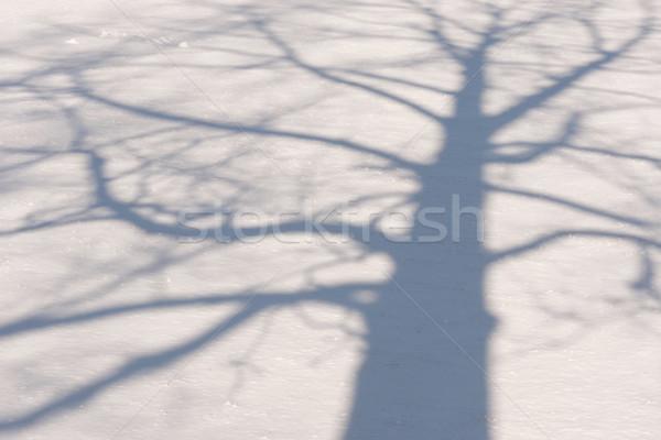 зима дерево тень голый области Сток-фото © skylight