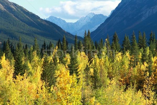 Jesienią kolor góry topola drzew lasu Zdjęcia stock © skylight