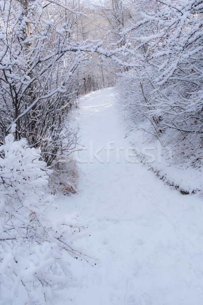 Snowy Pathway 3 Stock photo © skylight