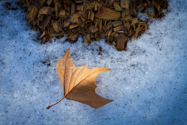Autumn leaf on snow with wood chips Stock photo © skylight