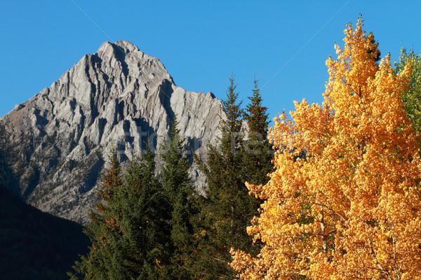 Zdjęcia stock: Jesienią · kolor · góry · topola · drzew · lasu