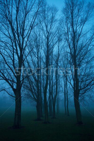 деревья парка город темно туманный вечер Сток-фото © skylight