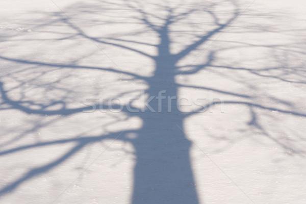 冬 ツリー 影 フィールド ストックフォト © skylight