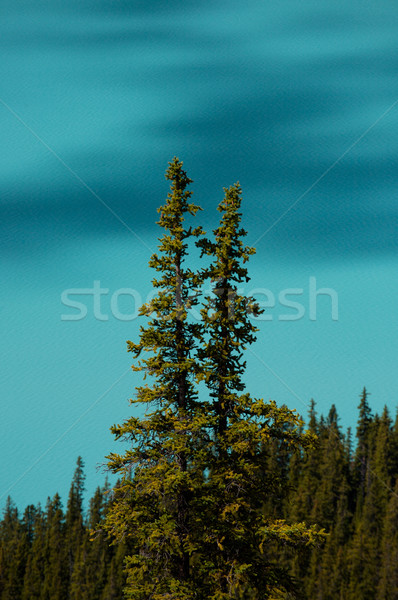Trees and alpine lake Stock photo © skylight