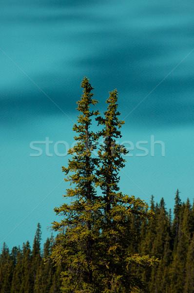 деревья альпийский озеро облаке Тени Сток-фото © skylight
