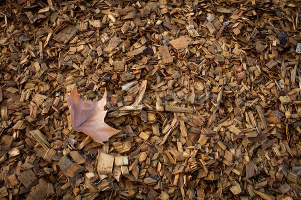 ősz levél fa sültkrumpli köteg Stock fotó © skylight