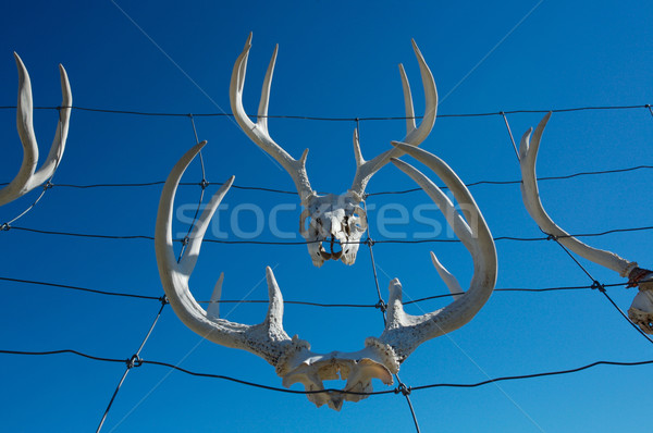 Cerca veado enforcamento arame céu Foto stock © skylight